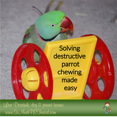 Solving Problem Parrot Chewing With Enrichment