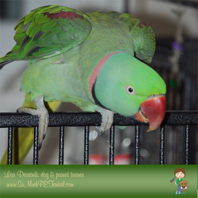 Power Of Positive Reinforcement To Solve Parrot Screaming