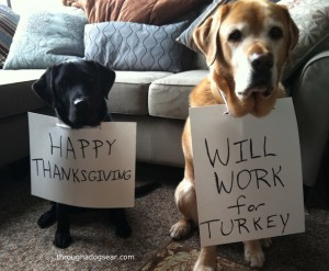 Thanksgiving Food Safety For Dogs