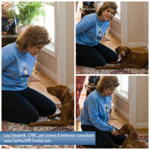 Cincinnati dog trainer Lisa Desatnik training a Vizsla puppy