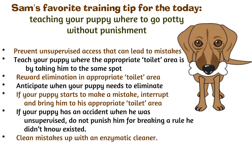 tips for successfully potty training your puppy without punishment