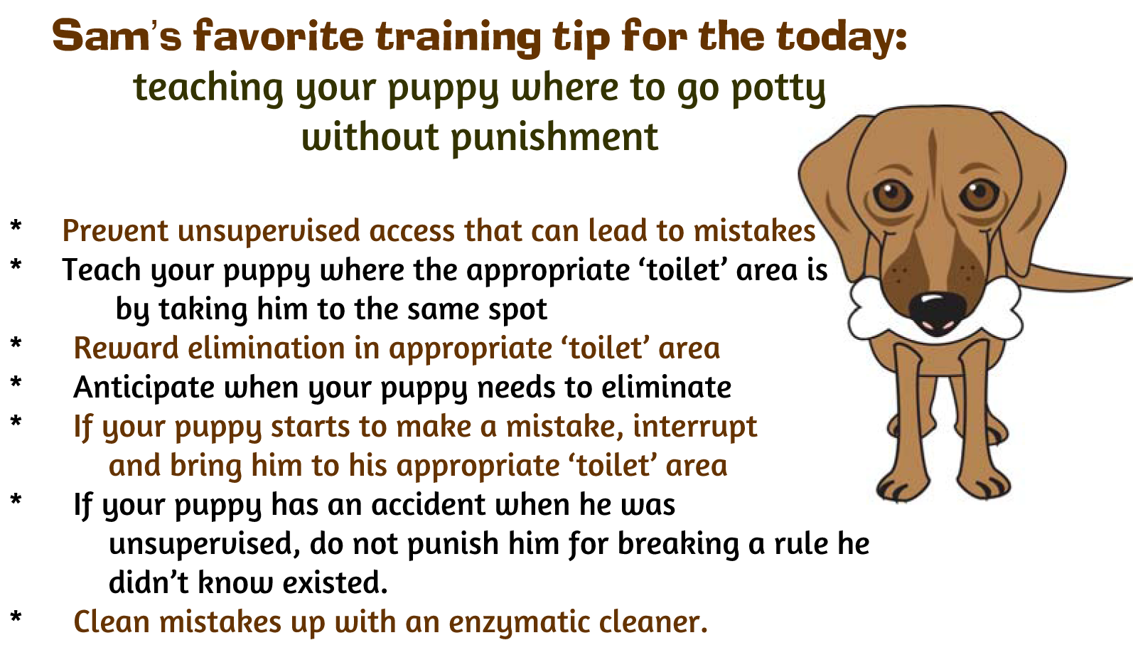 Potty Training Your Puppy…Without Punishment