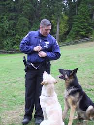 In Dog Training, Focus On The Positive Vs Punishment