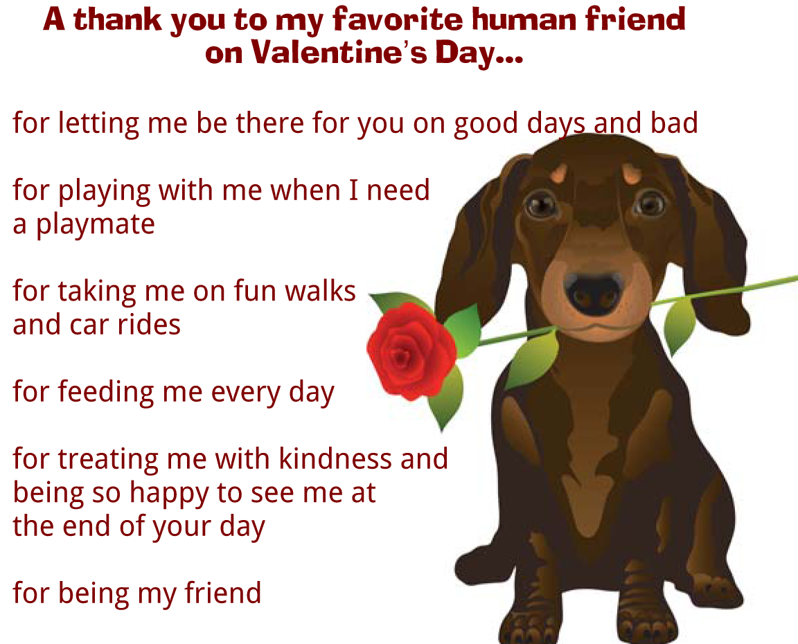 A Valentine's Day Message From Your Pet