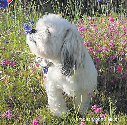 Why You May Be Having Recall Problems With Your Dog