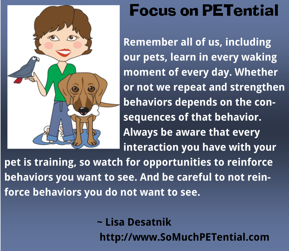 Pet training tip by Lisa Desatnik