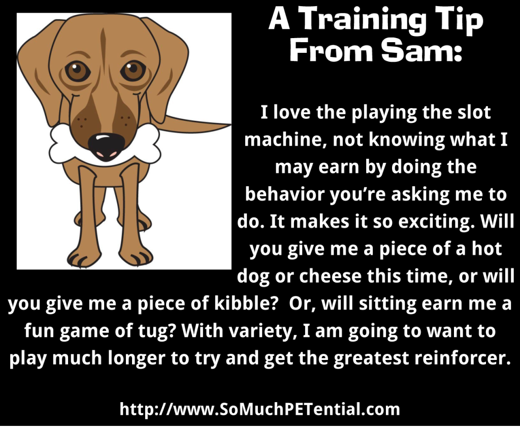 A Dog Training Tip On Reinforcement