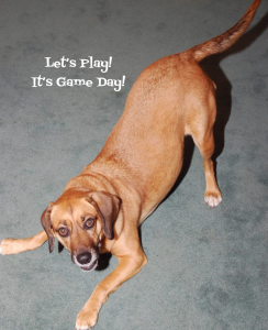 Teaching Your Dog Polite Greeting On Leash, In A Game