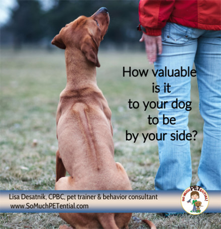 For teaching your dog loose leash walking, teach your dog to walk at your side.