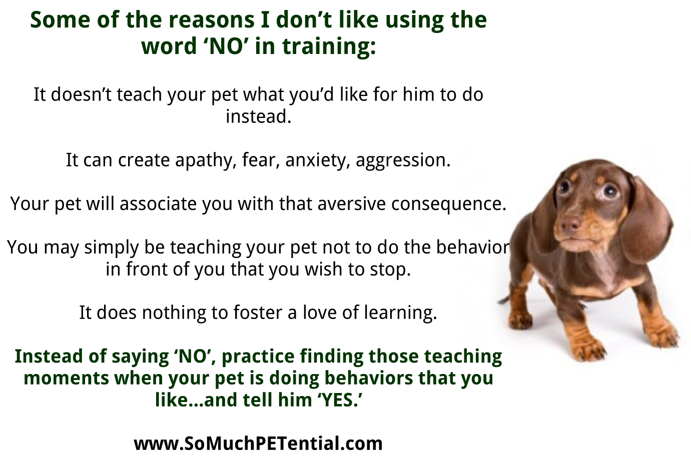 Some Of The Reasons I Don't Like 'NO' In Pet Training