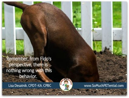 stopping or preventing your dog from digging in your yard