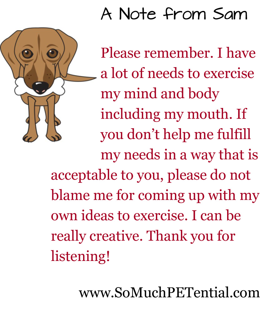 Exercising your pet's mind and body