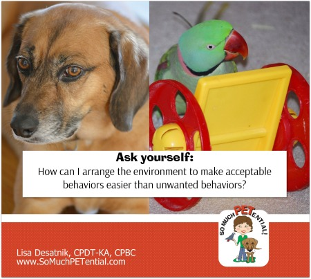Cincinnati certified dog trainer, Lisa Desatnik, CPDT-KA, CPBC, explains how arranging the environment can help to solve many dog and bird pet behavior problems.