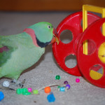 To Change Your Pet's Behavior, Try Changing The Environment