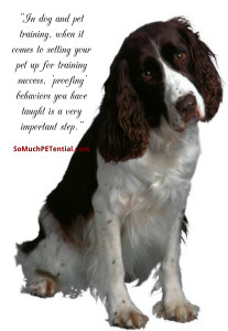 proofing in dog training