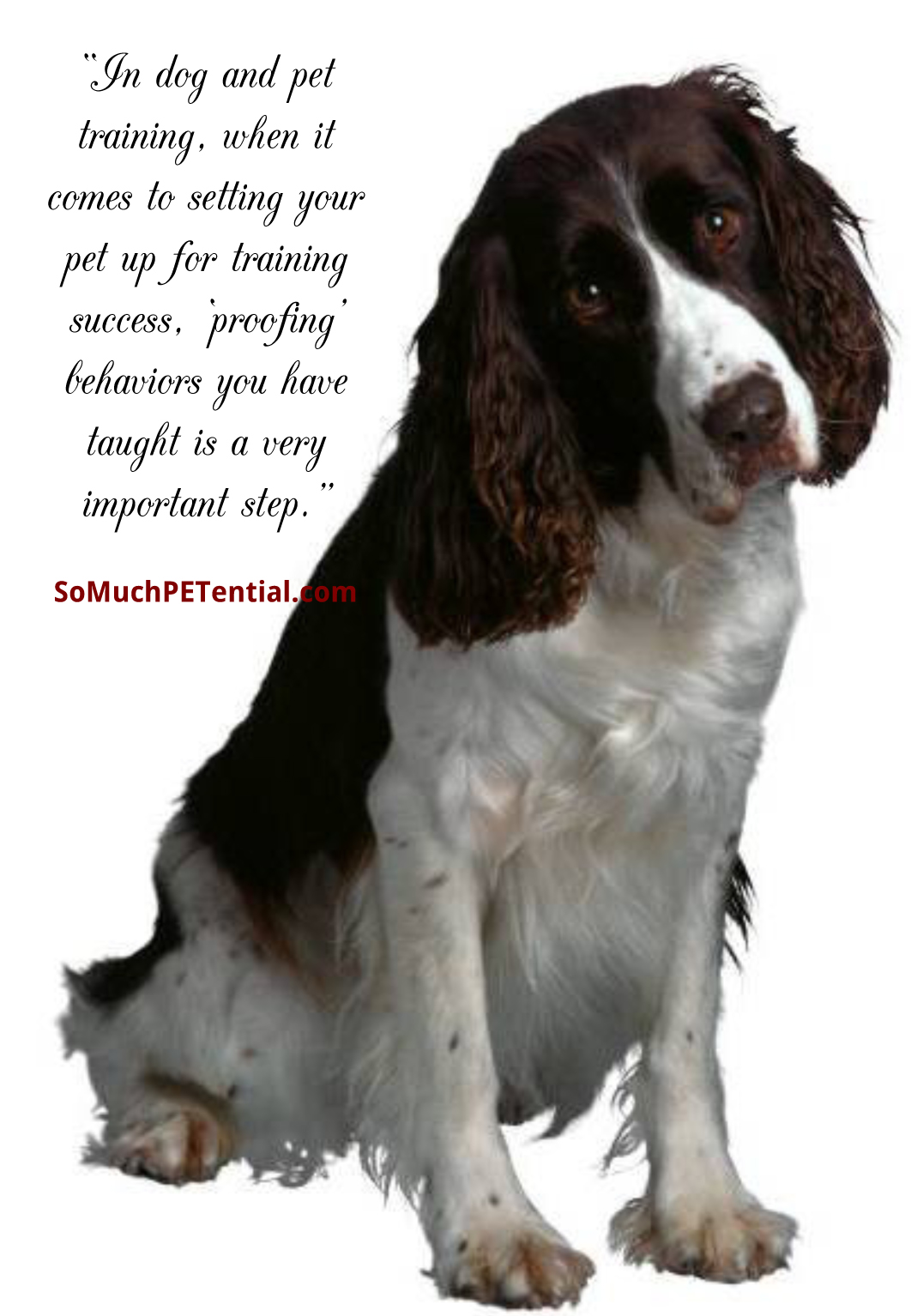 Proofing Behavior in Dog & Pet Training