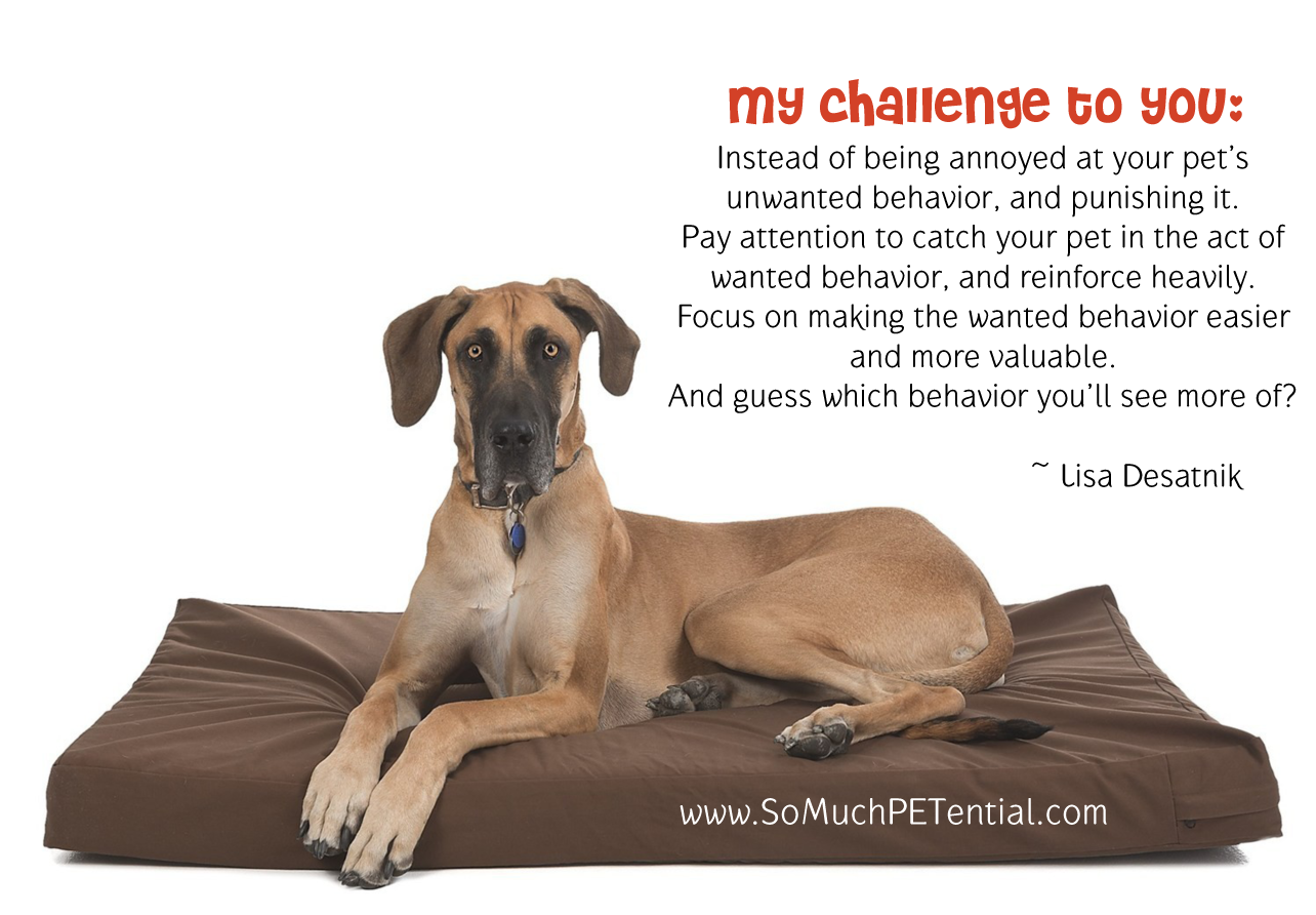 Challenge to pet owners