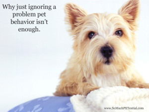Ignoring a problem pet behavior isn't enough