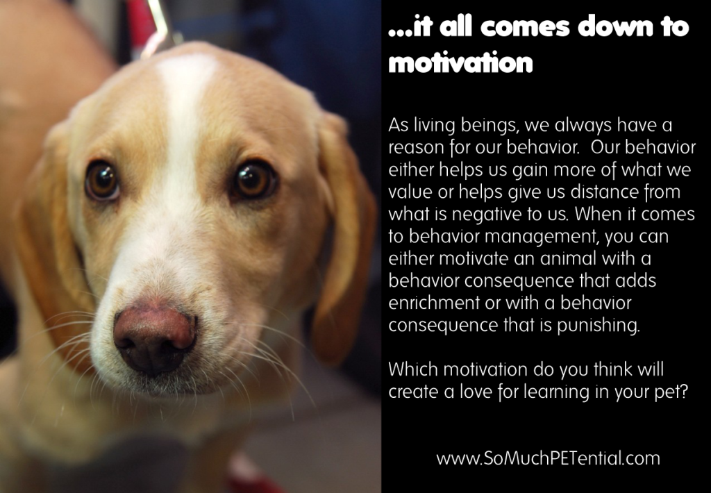 pet behavior comes down to motivation