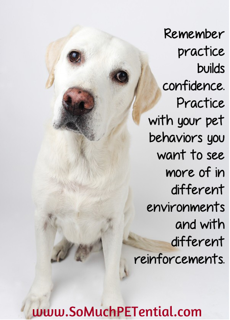 When it comes to dog and pet training - practice builds confidence