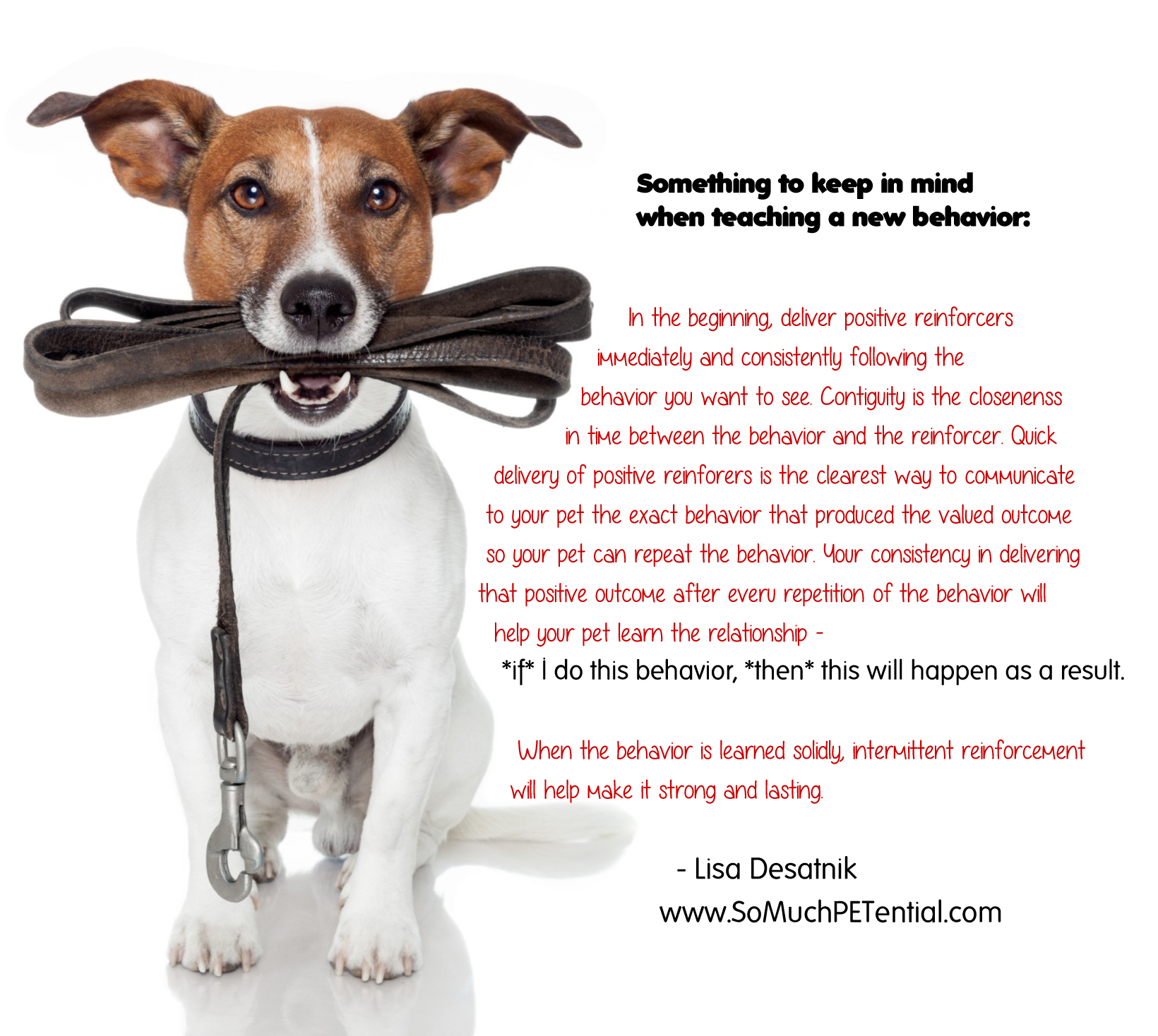 A Pet Training Tip on Reinforcement