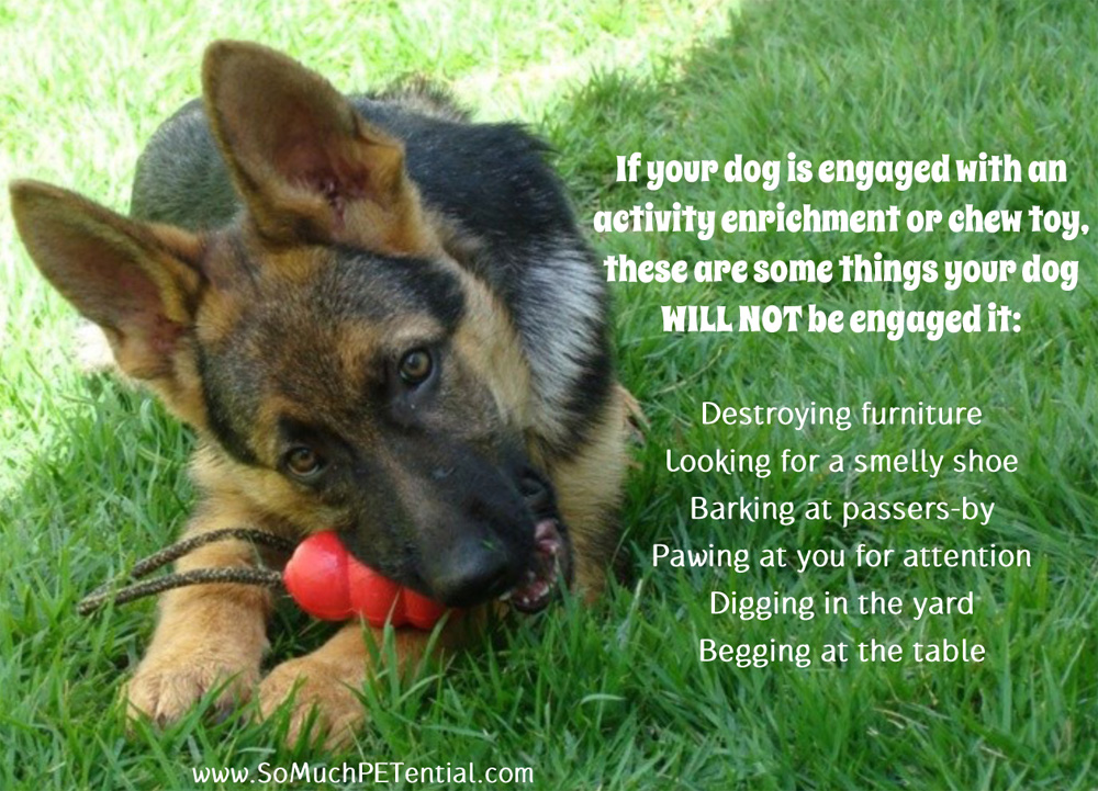 Giving Your Dog An Enrichment Toy Solves Behavior Problems