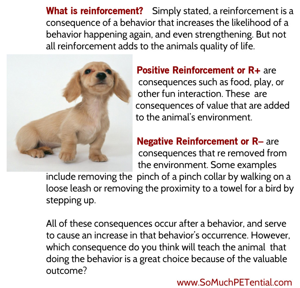 reinforcement in pet training