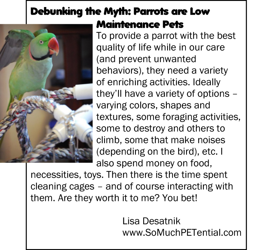 myth about pet parrots