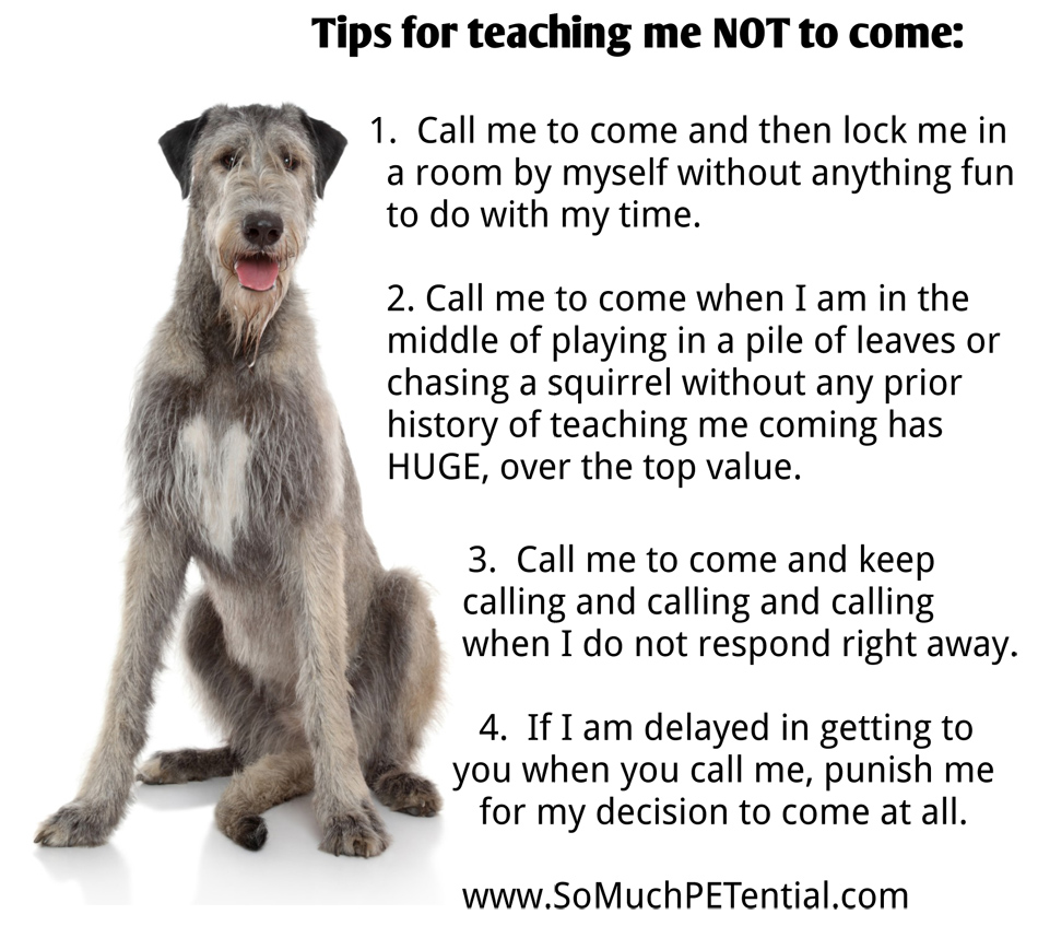 Dog Training Cincinnati