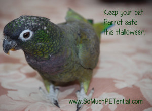 Halloween pet parrot safety tips