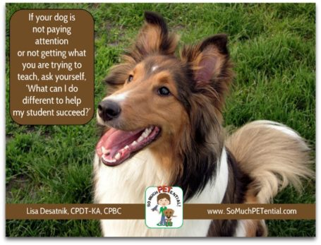 If you are dog training and your dog is ignoring you, these are some questions to ask yourself.