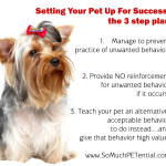 Three steps to solve pet behavior problems
