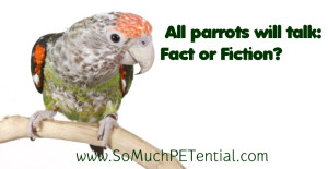 debunking the myth about whether all parrots talk