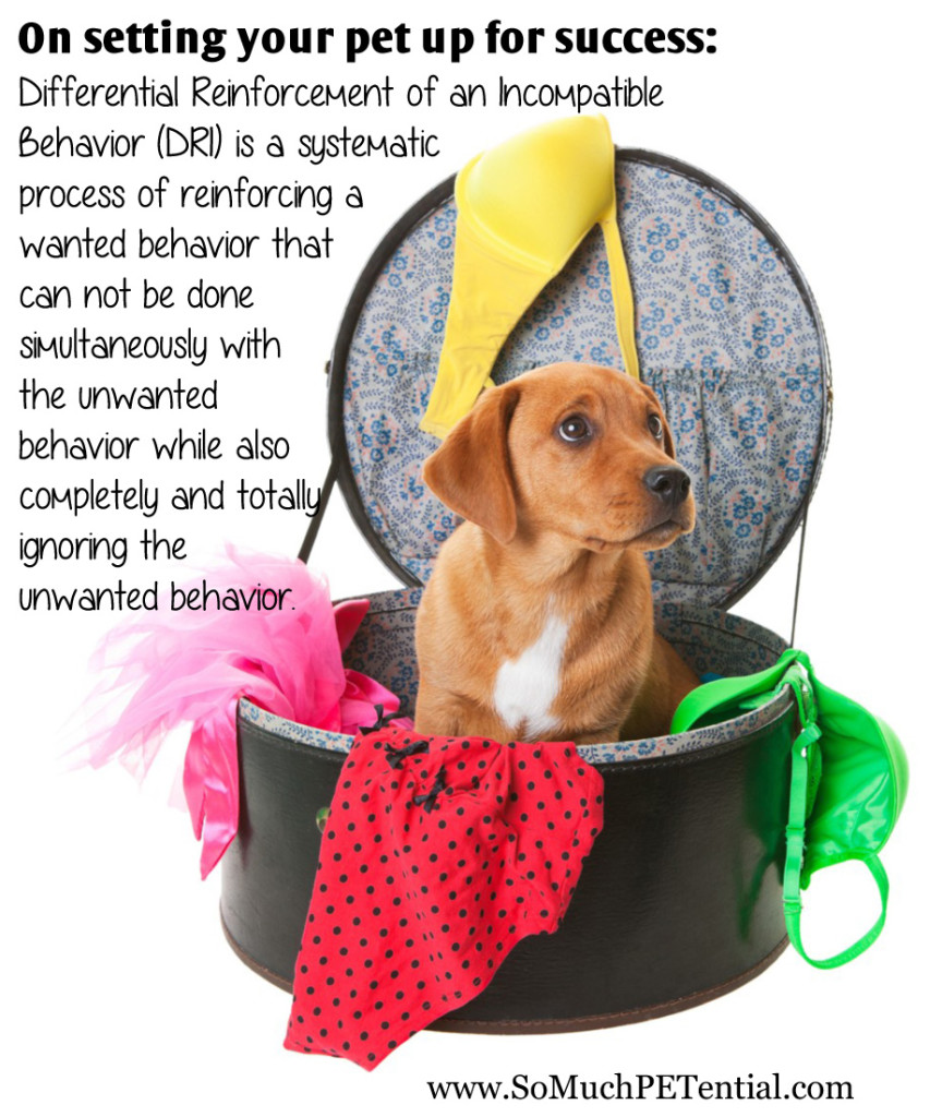 differential reinforcement of an incompatible behavior in dog training