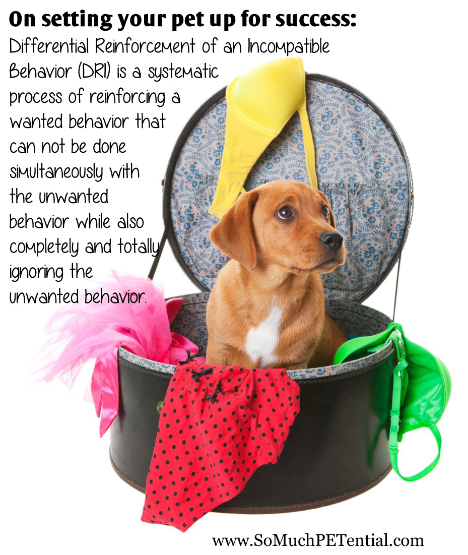 A Tip For Solving Dog And Pet Behavior Problems