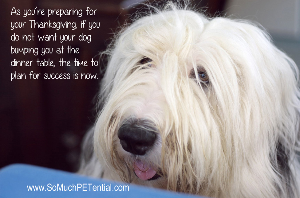 dog training tips to prepare for Thanksgiving