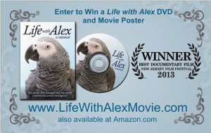 Alex the African Grey DVD