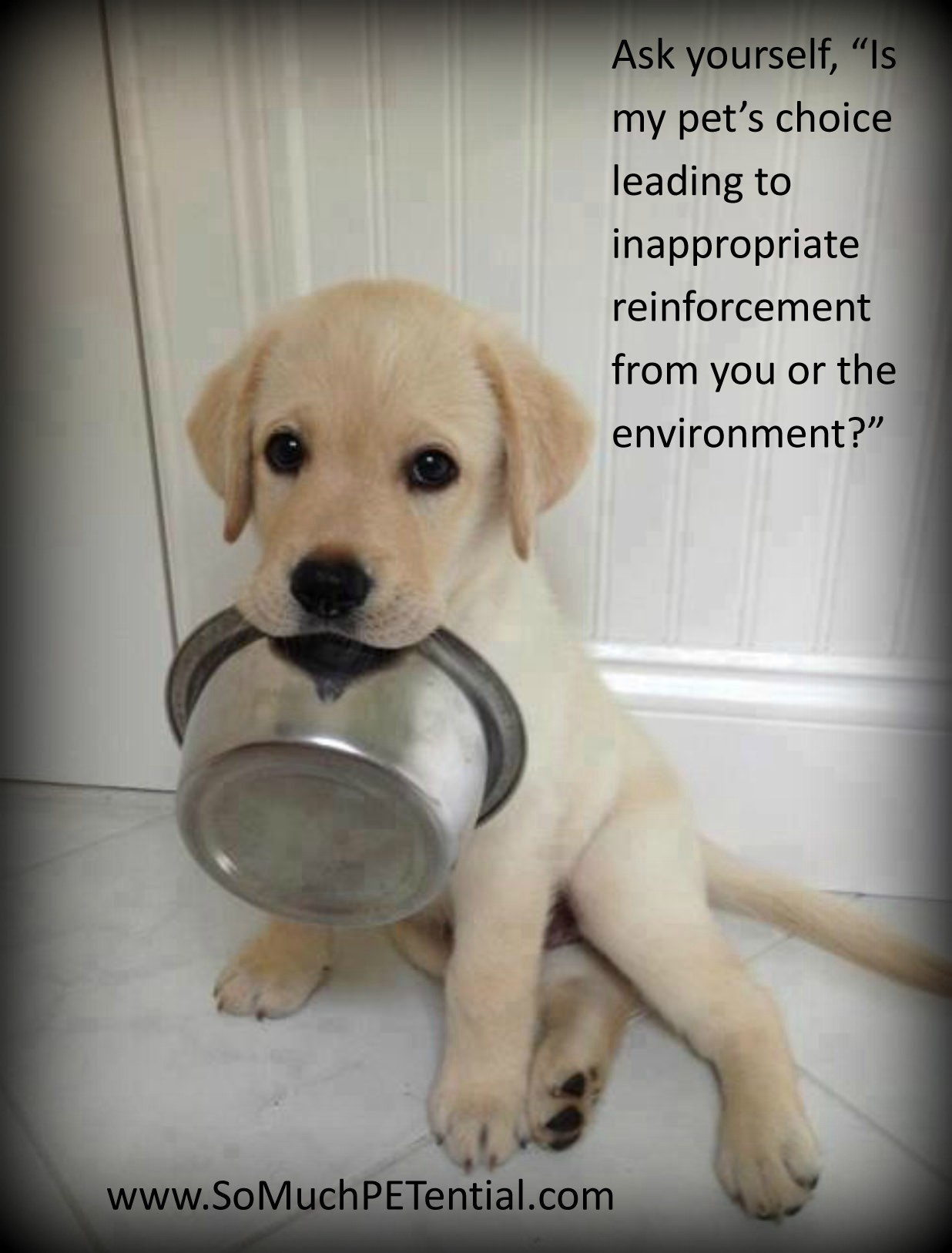 Remember Behavior In Pets Happens Because It Has Value