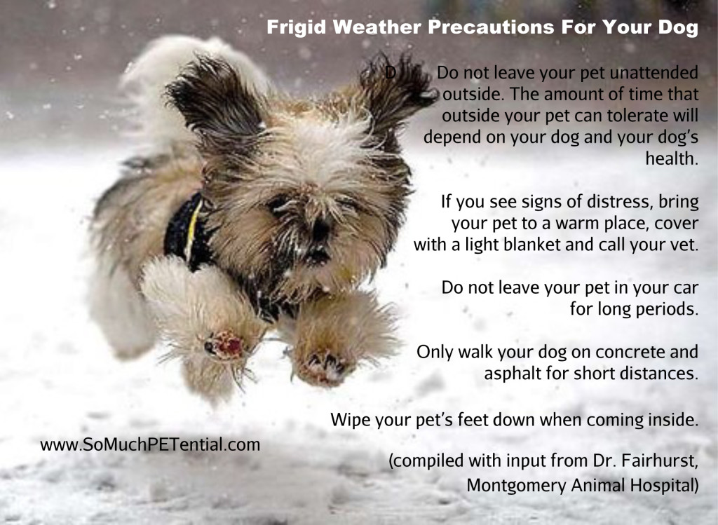 dog safety tips in frigid weather