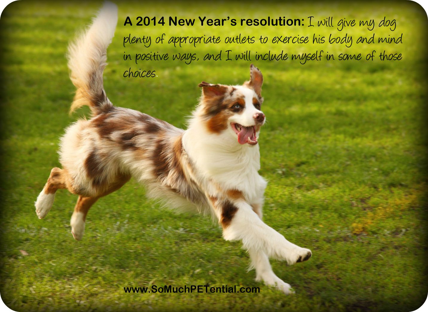 Dog Training New Year's Resolutions