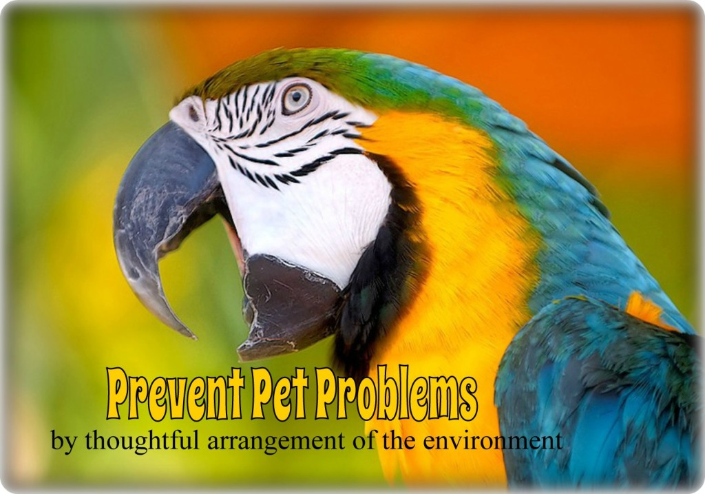 antecedent arrangement to prevent parrot screaming