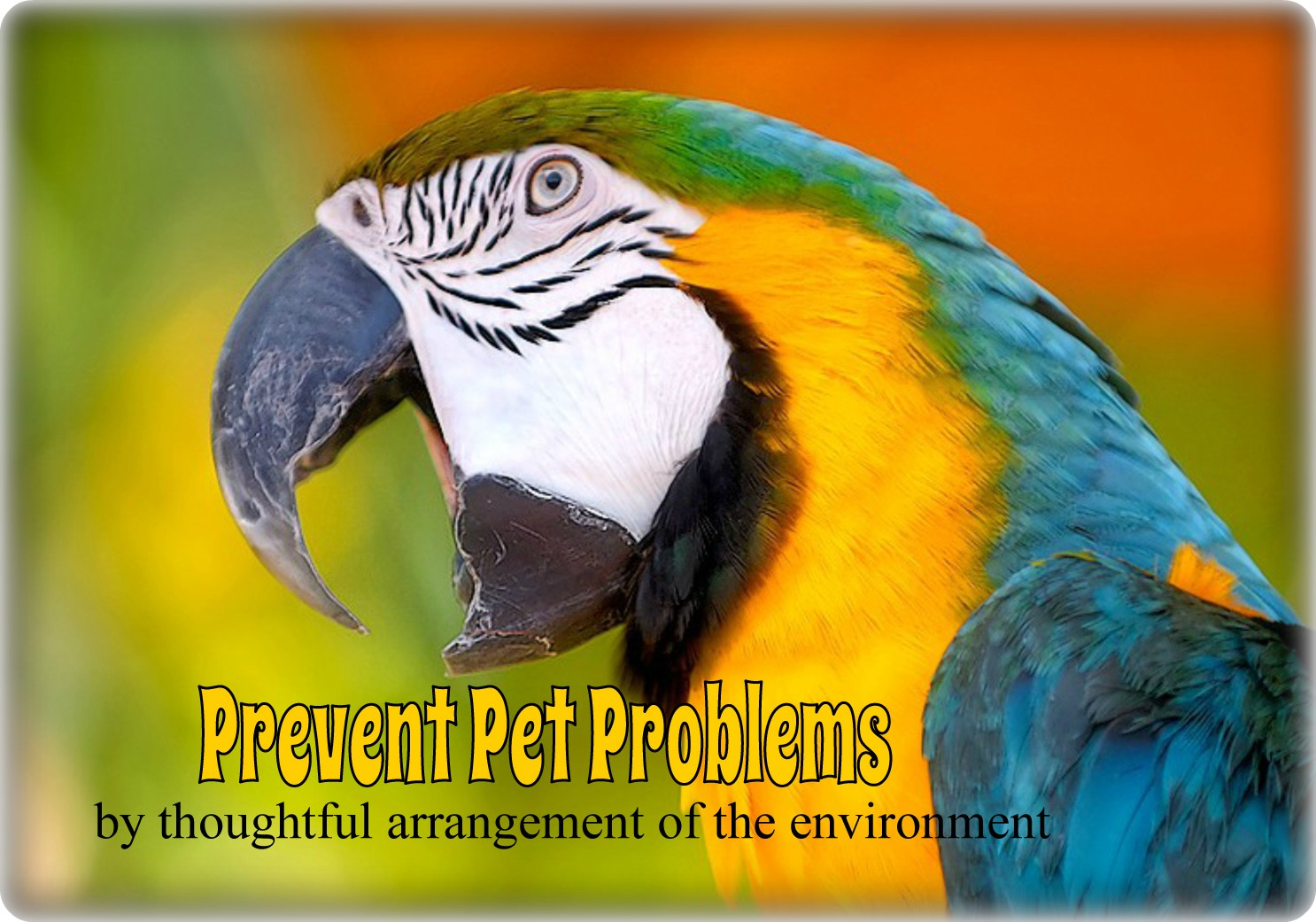 Using Antecedent Arrangement In Solving Pet Problems