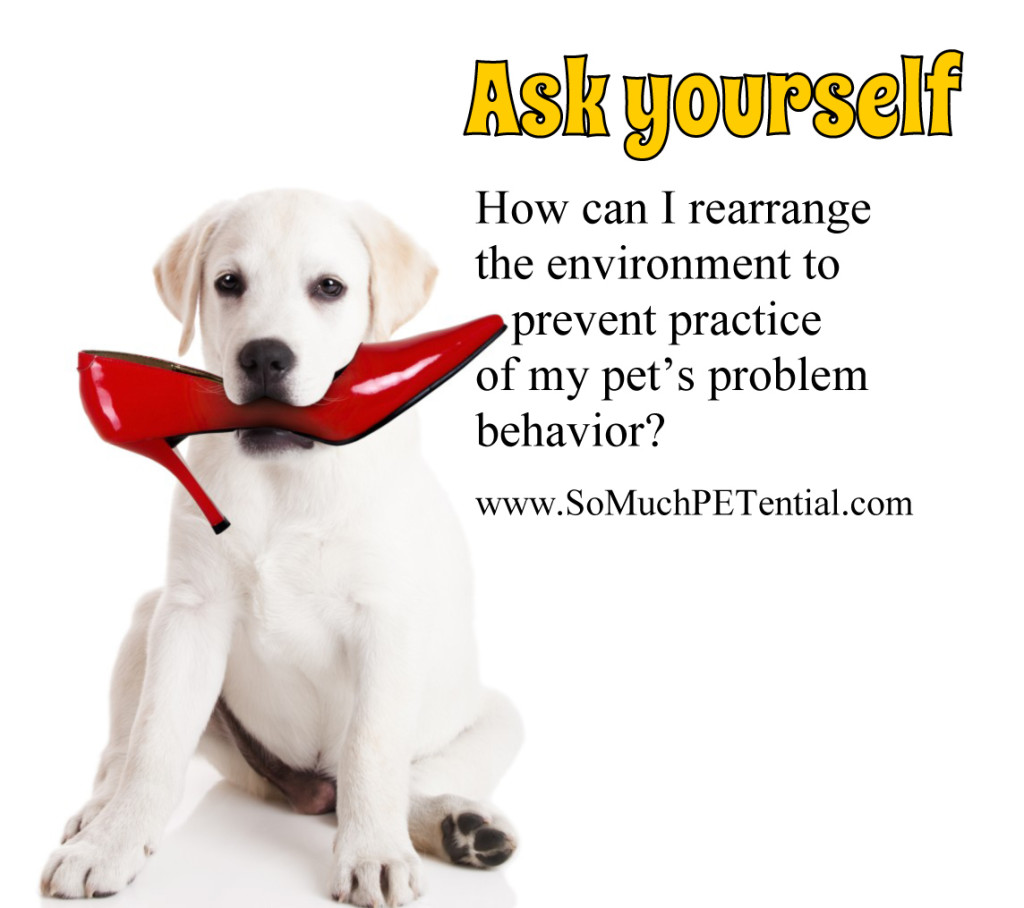 solving dog and pet behavior problem