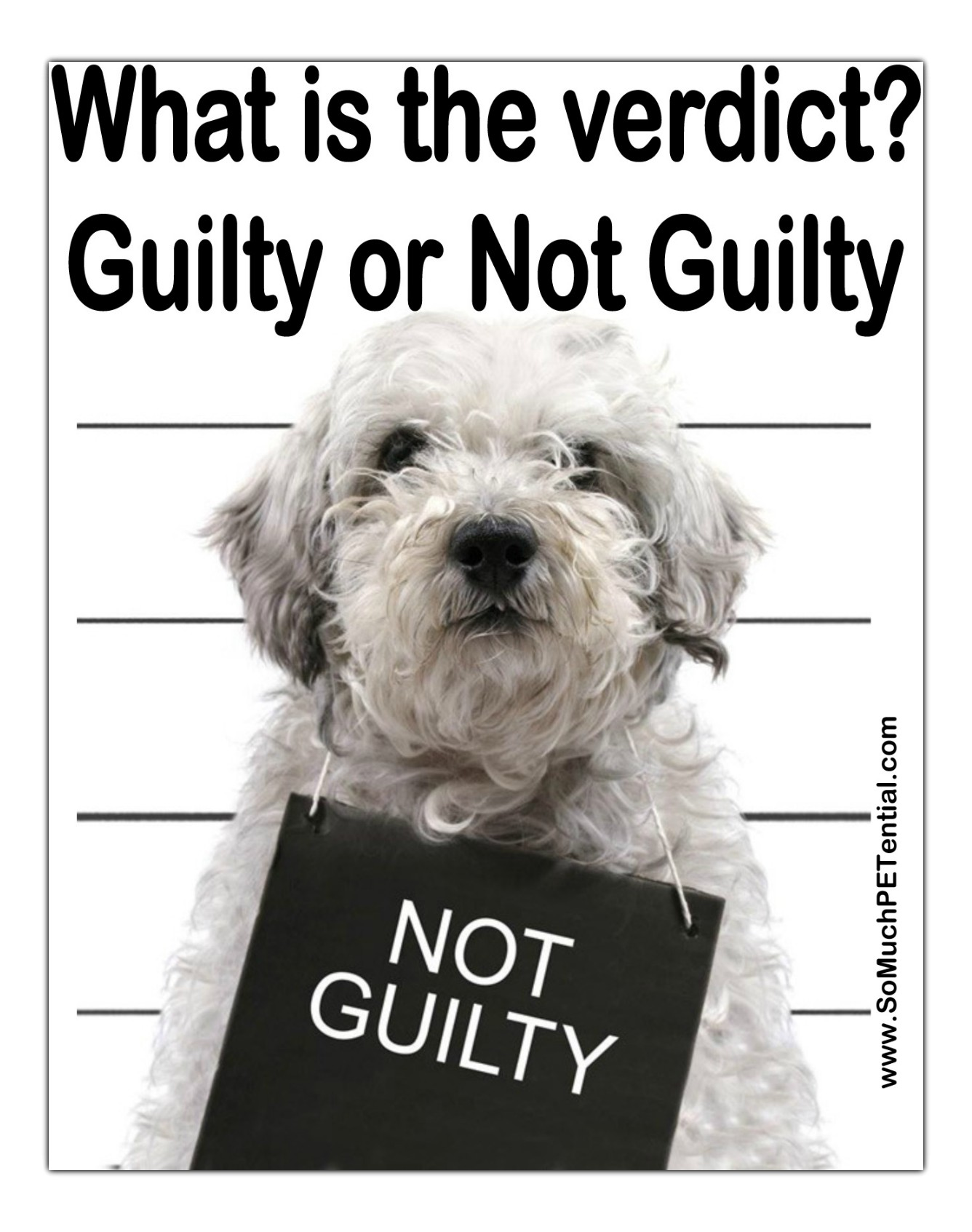 Is Your Dog REALLY A Guilty Dog?