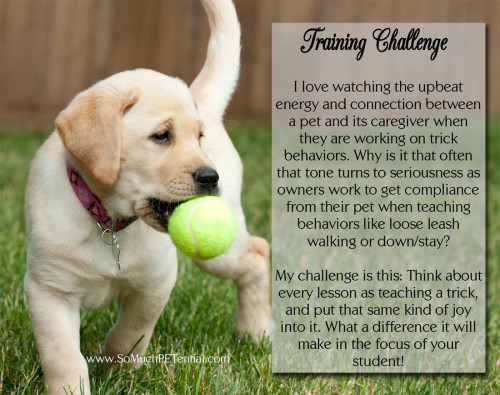 dog training tip - always teach your dog with positive reinforcement