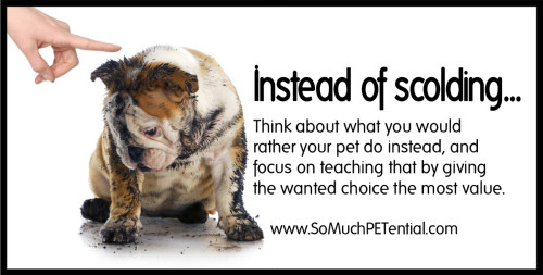 dog training tip using positive reinforcement by Cincinnati dog trainer Lisa Desatnik