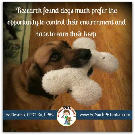 Dog Research: Do Dogs Want To Work For Their Food?