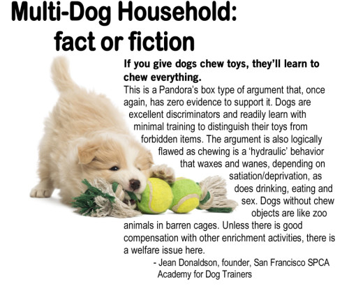 Dog Myth About Chew Toys