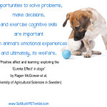 dog behavior research from Sweden on enrichment and training
