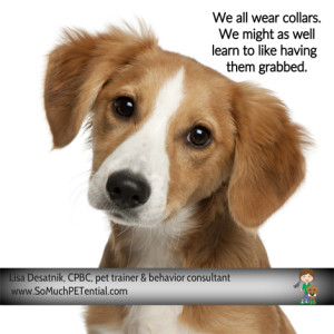teaching your dog to like having its collar grabbed